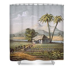 Vista De Una Vega De Tabaco, Or Shower Curtain by Spanish School