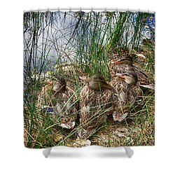 Waddle Of Ducks Shower Curtain by Trever Miller