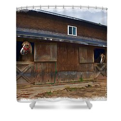 Waiting To Go Out In Field Shower Curtain by Dan Friend