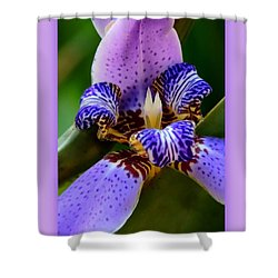 Walking Iris With Purple Border Shower Curtain by Carol Groenen