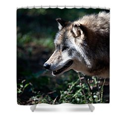 Wandering Wolf Shower Curtain by Karol Livote