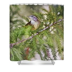 Warbler In The Cypress Shower Curtain by Deborah Benoit