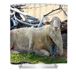 Was I Baaaad? Shower Curtain by Kathy  White