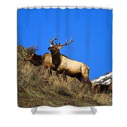 Watchful Bull Shower Curtain by Mike  Dawson