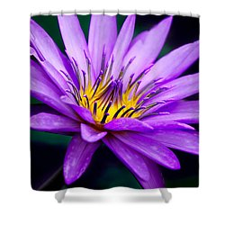 Waterlily #23 Shower Curtain by Chris Lord