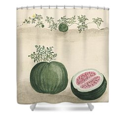 Watermelon Shower Curtain by Aged Pixel