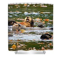 We Otter Be In Pictures Shower Curtain by Bob Hislop