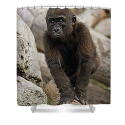Western Lowland Gorilla Baby Shower Curtain by San Diego Zoo