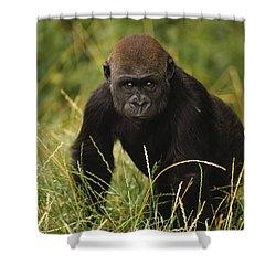 Western Lowland Gorilla Juvenile Shower Curtain by Gerry Ellis