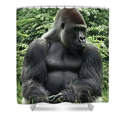 Western Lowland Gorilla Male Shower Curtain by Konrad Wothe