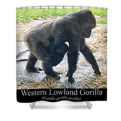 Western Lowland Gorilla With Baby Shower Curtain by Chris Flees