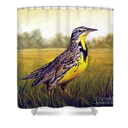 Western Meadowlark Afternoon Shower Curtain by Tom Chapman