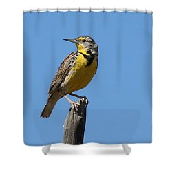 Western Meadowlark Perching Shower Curtain by Bob and Jan Shriner