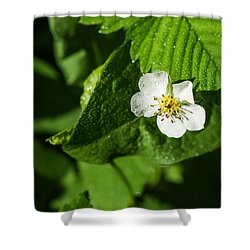 Wet Strawberry Flower - Featured 3 Shower Curtain by Alexander Senin