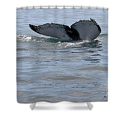 Whale Tail Shower Curtain by Bob Hislop