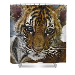 What A Face D3875 Shower Curtain by Wes and Dotty Weber