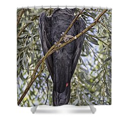What Are You Looking At Shower Curtain by Douglas Barnard
