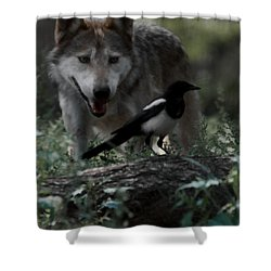 Whats For Dessert Shower Curtain by Ernie Echols