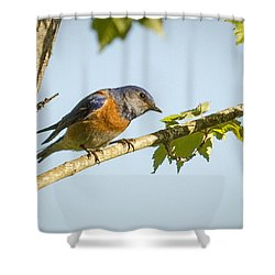 Whats Up Shower Curtain by Jean Noren