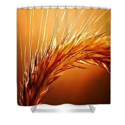 Wheat Close-up Shower Curtain by Johan Swanepoel