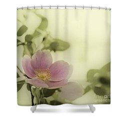 Where The Wild Roses Grow Shower Curtain by Priska Wettstein