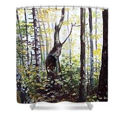 Where Time Stops Shower Curtain by Shana Rowe Jackson