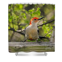 Which Way Did They Go Shower Curtain by Lois Bryan
