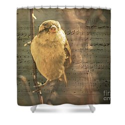 Whistling Song Sparrow Shower Curtain by Janice Rae Pariza