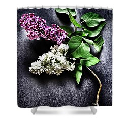 White And Purple Lilacs Shower Curtain by Marianna Mills
