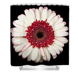 White And Red Gerbera Daisy Shower Curtain by Adam Romanowicz