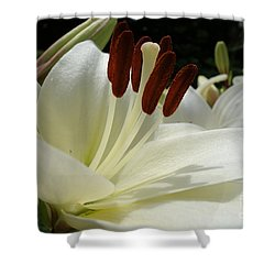 White Asiatic Lily Shower Curtain by Jacqueline Athmann
