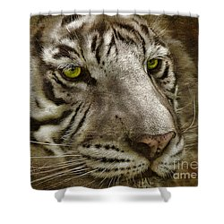White Bengal Shower Curtain by Lois Bryan