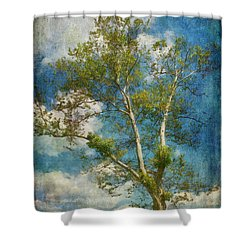 White Birch In May Shower Curtain by Lois Bryan