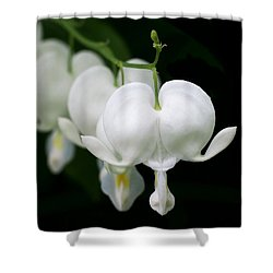 White Bleeding Hearts Shower Curtain by Rona Black