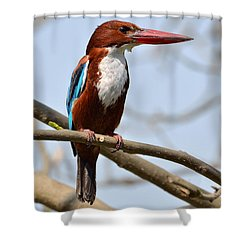 White Breasted Kingfisher Shower Curtain by Fotosas Photography