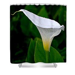 White Calla Shower Curtain by Rona Black