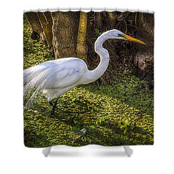 White Egret On The Hunt Shower Curtain by Marvin Spates