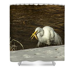 White Egret Snowy Bank Shower Curtain by Robert Frederick