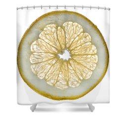 White Grapefruit Slice Shower Curtain by Steve Gadomski