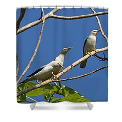 White-headed Starlings Havelock Isl Shower Curtain by Konrad Wothe