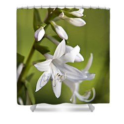 White Hosta Flower Shower Curtain by Christina Rollo