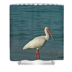 White Ibis Shower Curtain by Cindi Ressler