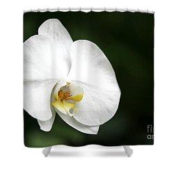 White Light Shower Curtain by Sabrina L Ryan