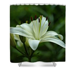 White Lily Shower Curtain by Sandy Keeton