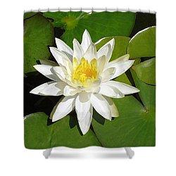 White Lotus Shower Curtain by Ellen Henneke