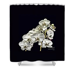 White Orchids Shower Curtain by Tom Prendergast