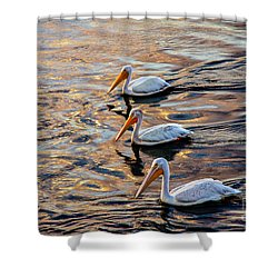 White Pelicans  In Golden Water Shower Curtain by Robert Bales