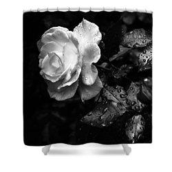 White Rose Full Bloom Shower Curtain by Darryl Dalton