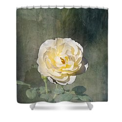 White Rose Shower Curtain by Kim Hojnacki