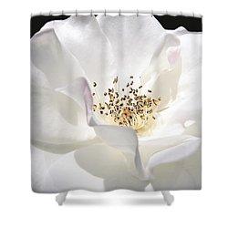 White Rose Petals Shower Curtain by Jennie Marie Schell